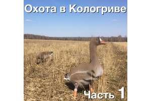 Охота на гуся в Кологриве. С 30 апреля по 4 мая 2016.  Часть 1
