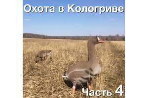 Охота на гуся в Кологриве. С 30 апреля по 4 мая 2016. Часть 4