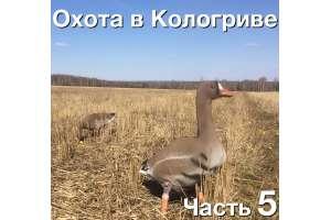 Охота на гуся в Кологриве. С 30 апреля по 4 мая 2016. Часть 5
