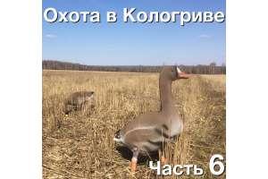 Охота на гуся в Кологриве. С 30 апреля по 4 мая 2016. Заключительная часть